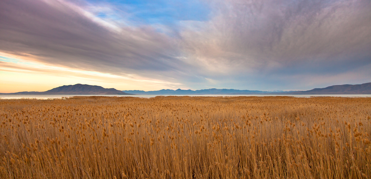 field of reeds to utah lake_randy judkins (1)