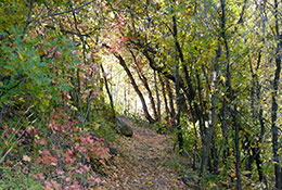 Big-Springs-Trail-Fall