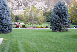 Kiwanis-Park-Pine-Trees