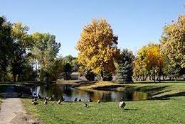 Wilderness-Park-Duck-Pond
